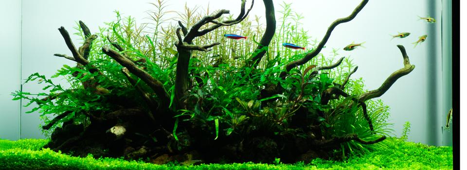 えはぶろ|水草水槽.植物.写真.猫.ゲームなど