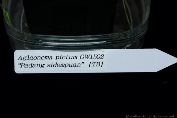 IMGP9314